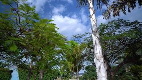 Walking under the Plam trees at Tenerife stock footage