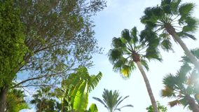 Walking under the Plam trees at Tenerife stock video