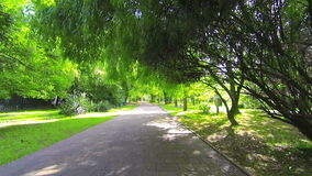 Walking under trees in city park by green lawn on a summer sunny day. POV stock video footage