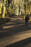 Walking uphill in woods at Tandle Hill, Royton Stock Photos