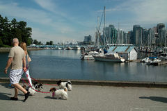 Walking Vancouver B.C., Canada. Walking the dogs on the Stanley Park seawall, Vancouver B.C., Canada royalty free stock images