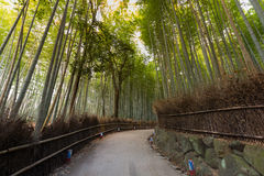 Walking walk leading to Bamboo jungle Royalty Free Stock Image