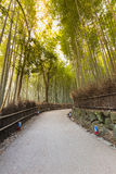 Walking way in Bamboo forest, Arashiyama Japan Royalty Free Stock Image