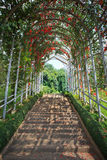 Walking way with beautiful flower plant cover on above Stock Image