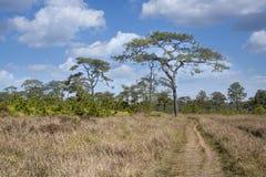 Walking way in dry grasses field Stock Photo