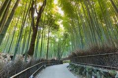 Walking way leading in Bamboo forest. Arashiyama Kyoto Japan Royalty Free Stock Image