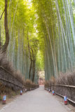 Walking way leading to bamboo forest Royalty Free Stock Image