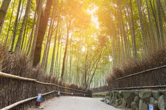 Walking way leading to Bamboo forest, tropical landscape background Royalty Free Stock Images