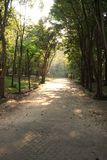 Walking way to the forest in the morning Royalty Free Stock Images