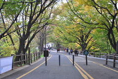 Walking way to the Seoul Tower Royalty Free Stock Photos
