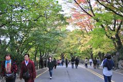 Walking way to the Seoul Tower Stock Images
