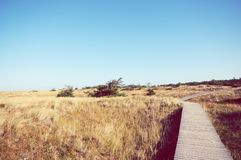 Walking through the Western Pomerania Lagoon Area National Park Stock Image