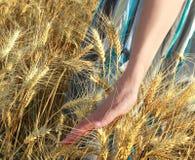 Walking on the wheat land. Woman walking on the wheat land Stock Image