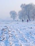 Walking in winter. Wandering in the corn field in winter Royalty Free Stock Photography