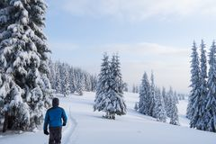 Walking in the winter forest Royalty Free Stock Photography