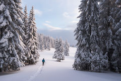 Walking in the winter forest Royalty Free Stock Photo