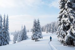 Walking in the winter forest Royalty Free Stock Images