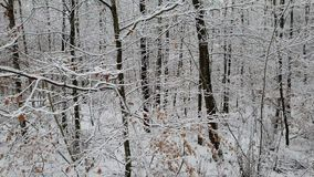 Walking in a winter forest during a snowfall stock video footage