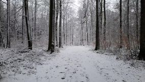 Walking in a winter forest during a snowfall stock video