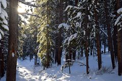 Walking in a Winter Wonderland. This image was taken climbing Mt. Elbert in Colorado stock images