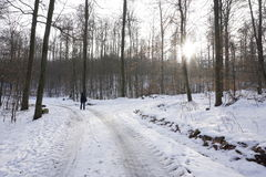 Walking in winterly forest Stock Photos