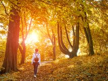 Walking woman in autumn forest Stock Images