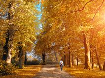 Walking woman in the autumn park Royalty Free Stock Image