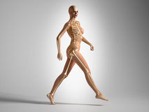 Walking woman with bone skeleton. Royalty Free Stock Photography