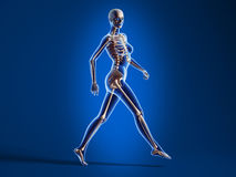 Walking woman with bone skeleton. Stock Images