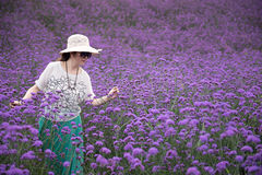 Walking woman in Lavender Field royalty free stock image