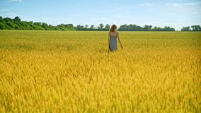 Walking woman touch wheat ears. Nature beauty woman stock video footage