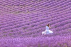 Beautiful girl in a white dress enjoying summer in a lavender field at sunset royalty free stock photos