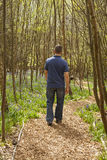Walking in Woodland. Adult male walking through woodland in spring time Royalty Free Stock Photography