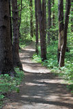 Walking in the woods. Path through forest Stock Photos