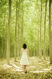 Walking on woods Royalty Free Stock Image