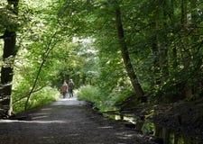 Walking through woods Stock Photos