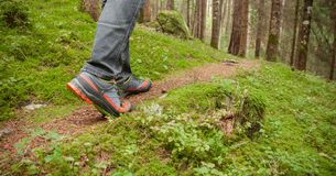 Walking in the woods long a path Royalty Free Stock Image