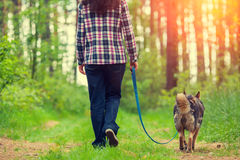 Walking in the woods in the morning Royalty Free Stock Photo