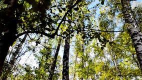 Walking in the woods, sun shining stock video
