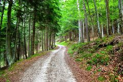 Walking in the woods in Trentino Alto Adige, Italy. Way forward in the forest on summer time royalty free stock photo