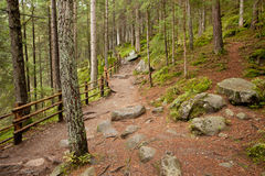 Walking in the woods Royalty Free Stock Photography