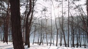 Walking in the woods. Winter forest park at sunset. Walking in the woods. Steadicam shot. Winter forest park at sunset stock footage