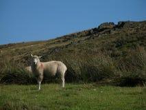 Walking on the yorkshire moors. Stock Photo