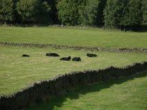 Walking on yorkshire moors. Stock Photo