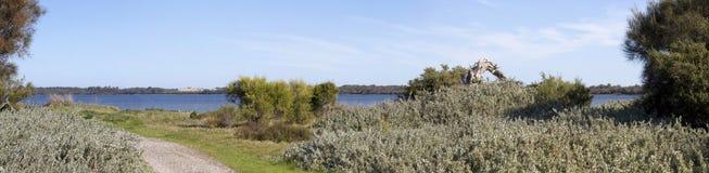 从walkpath的风景全景沿Leschenault出海口Bunbury西澳州 免版税图库摄影