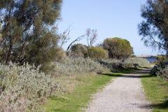 从walkpath的风景全景沿Leschenault出海口Bunbury西澳州 免版税库存照片