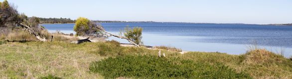 从walkpath的风景全景沿Leschenault出海口Bunbury西澳州 免版税库存图片