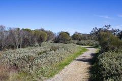Walkpath вдоль лимана Bunbury западной Австралии Leschenault стоковое изображение rf