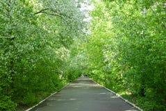 Walkpath. Asphalt walkpath in the wild apple forest Stock Photo