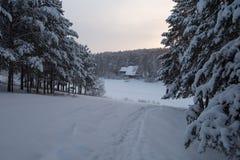 Walkpath attraverso la foresta di inverno Fotografia Stock Libera da Diritti